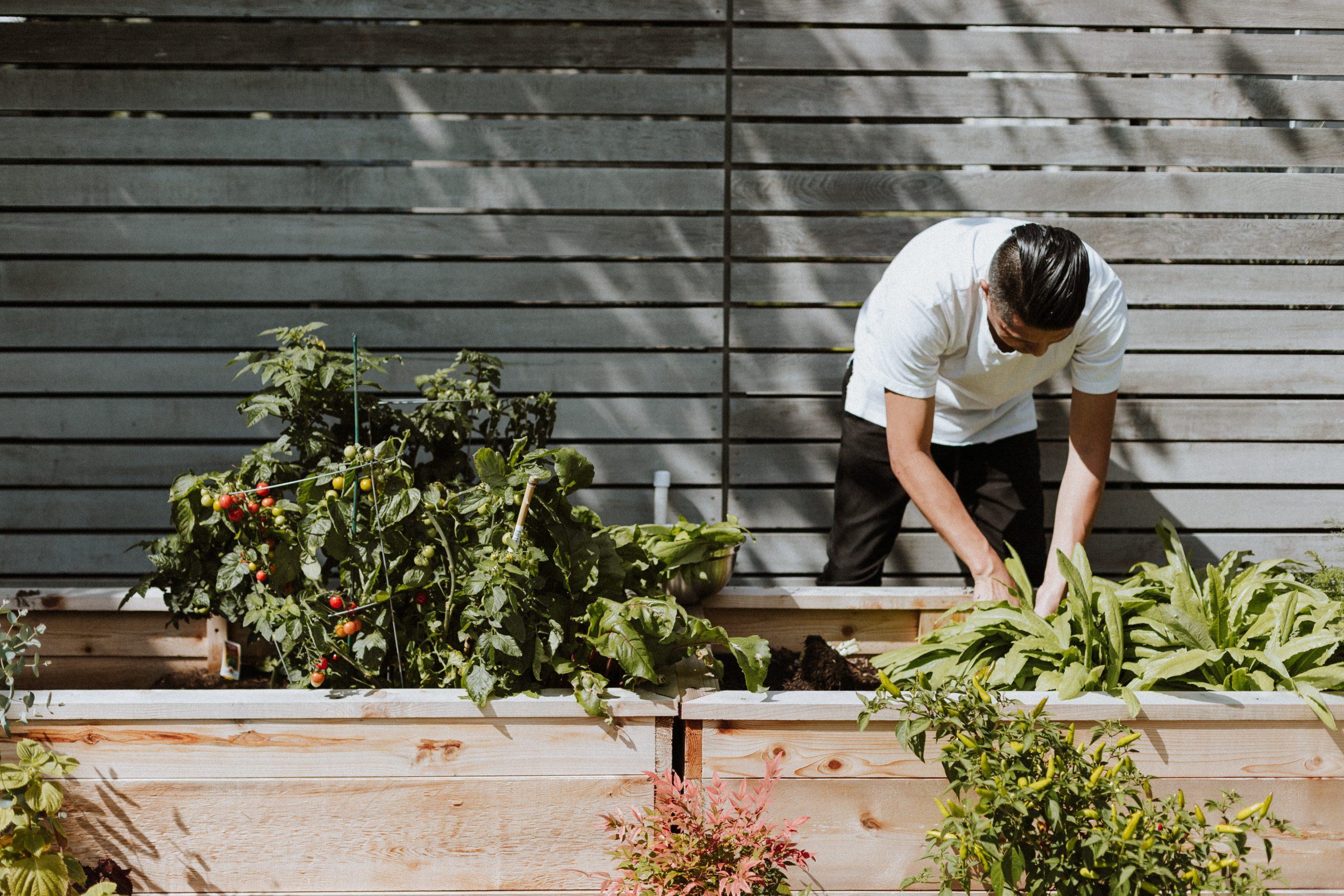 How gardening can reduce anxiety